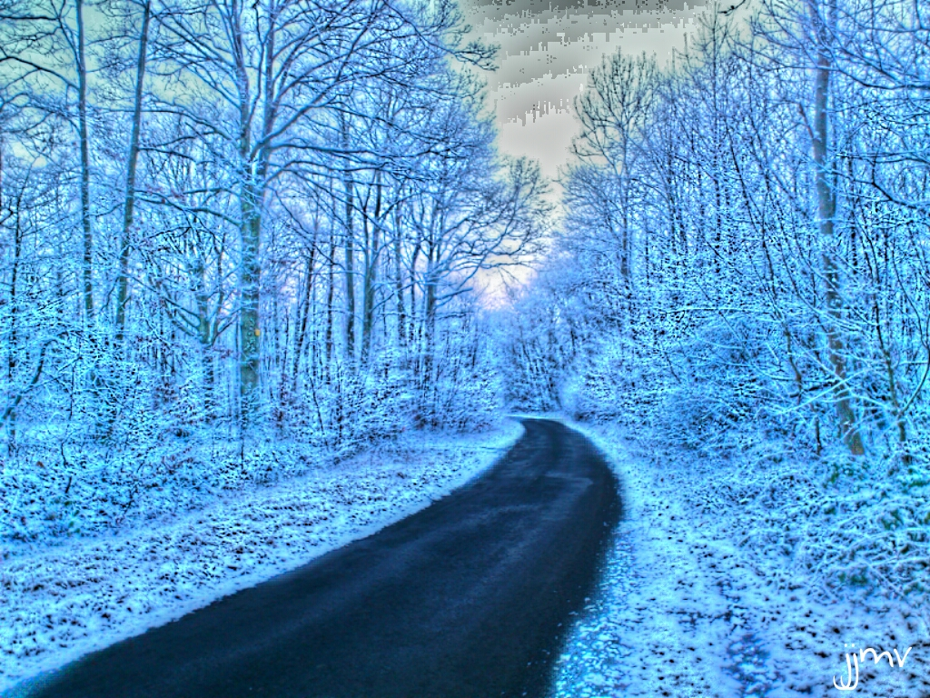 Road in the wood during winter