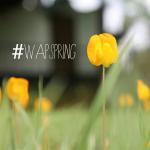 Yellow tulip portrait photo