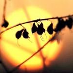 Blurred sunset photo