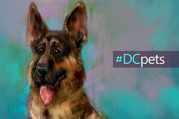 Drawing Pets in PicsArt: #DCpets