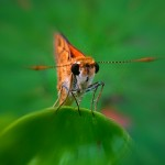 Orange butterfly close up photo