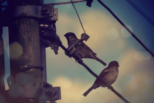 Birds On Wires: A Photo Gallery