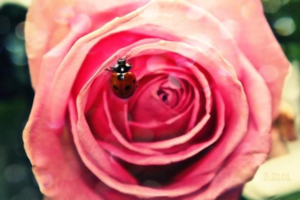 Photo Gallery of Beautiful Flowers