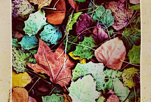 Photo Gallery of Autumn: Falling Leaves and Changing Colors