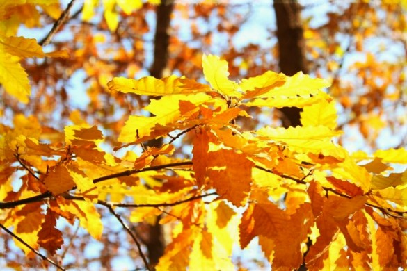Tutorial: Fall Photography: Capturing the Colors of Autumn