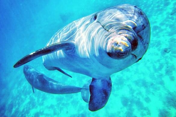 Photo Gallery: 8 Amazing Dolphin Photos!