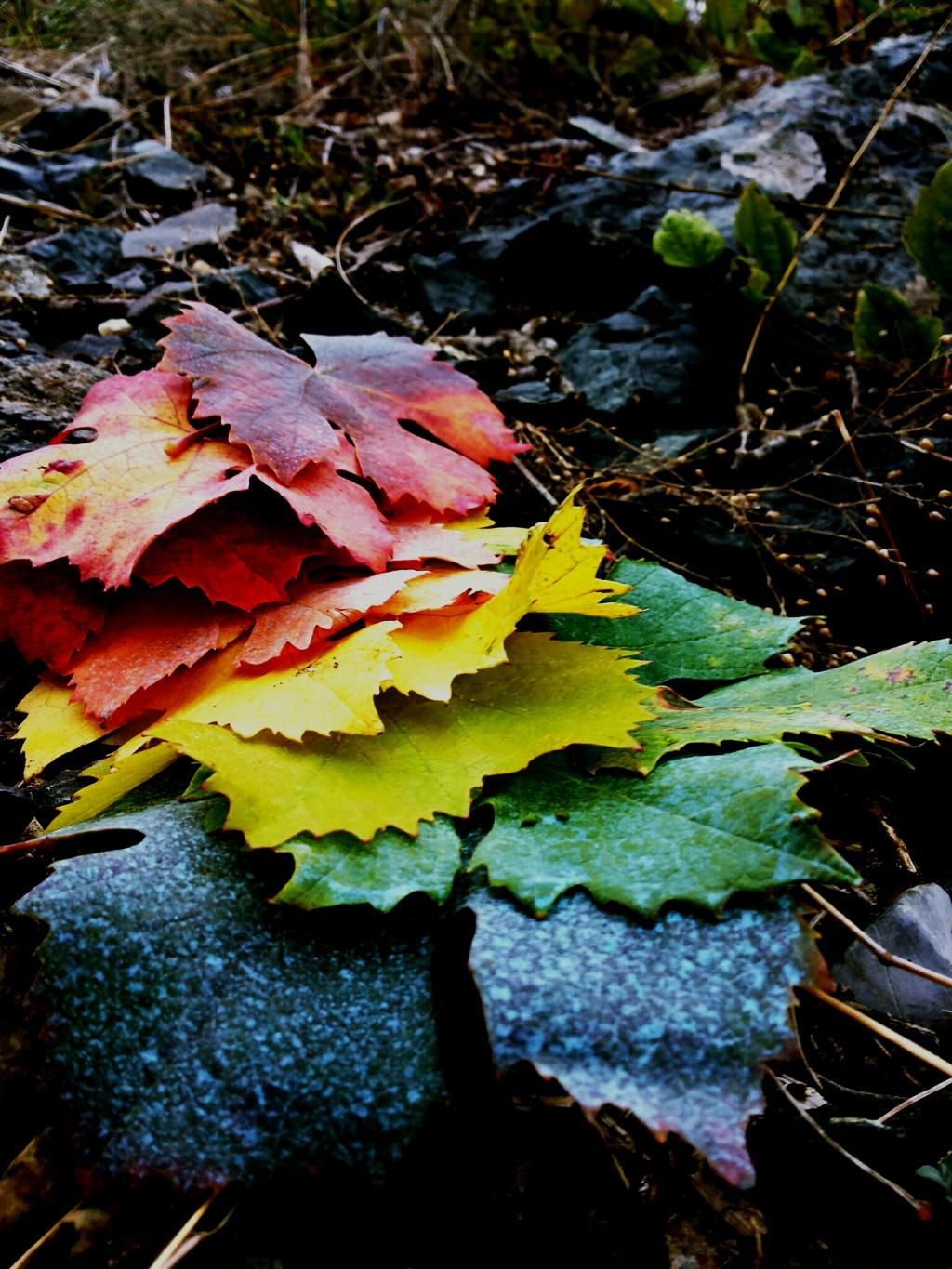 Autumn leaves for week review