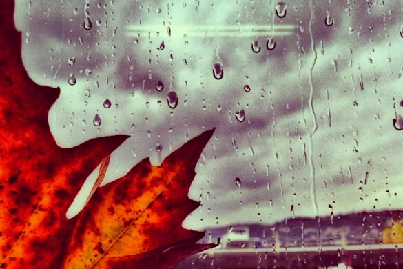 Showers of Melancholy: A Gallery of Rainy Days