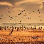 Birds flying over the beach