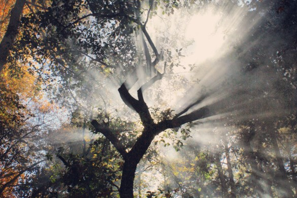 In the Heart of the Forest: Photo Gallery by PicsArt Users