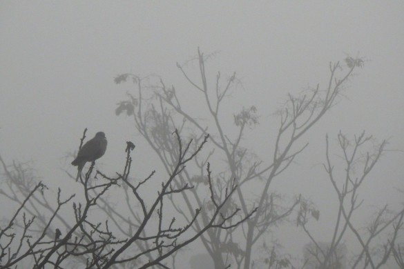 Shrouded Beauty: A Gallery of Fog