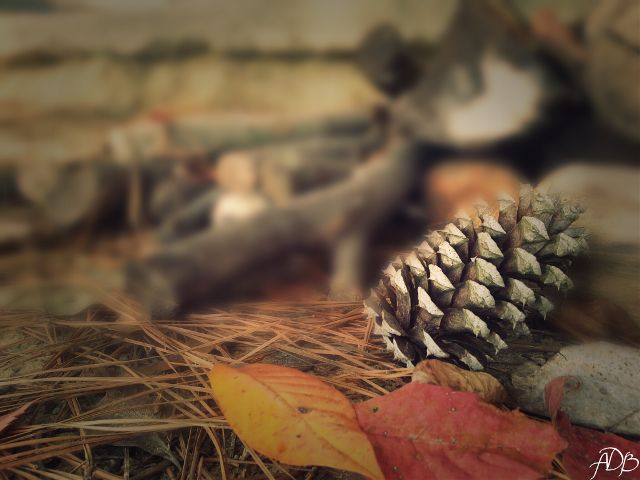 pine cone pictures