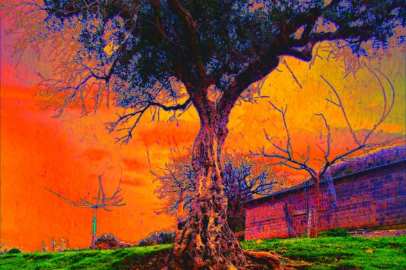 How to Create Surrealistic Images with PicsArt's Holga Effect