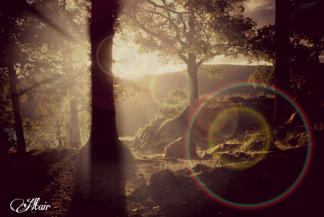 Photo of the wood edited with lens flare