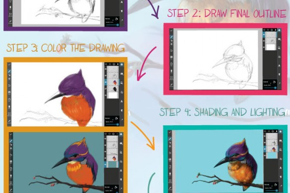 Main Steps on How to Draw a Bird