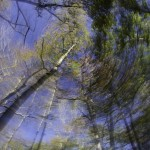 Photo of tress edited with tiny planet effect