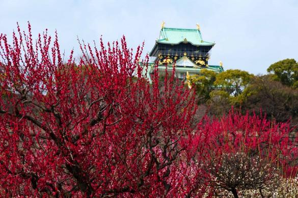 Zen Photography: Japanese Gardens Captured by PicsArtists