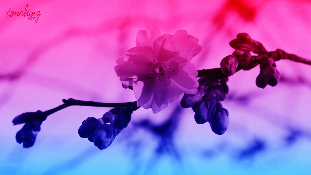 Amazing use of gradient effect on orchid photo
