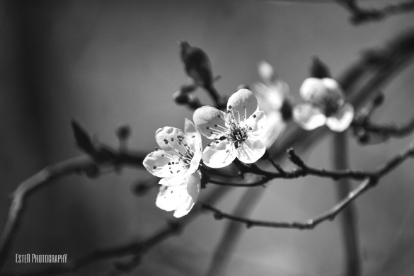 User EsteR PhotographY Takes Amazing B&W Flower Shots