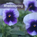 Violet photo for hellospring tag