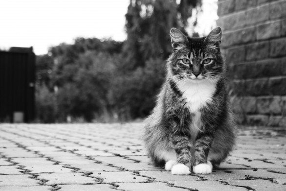 Cat Encounters of the First Kind: a Photo Gallery