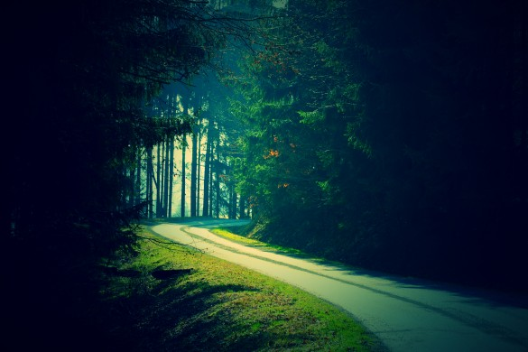 PicsArtist Eileen Captures Mystical Shots of Forests and Flowers