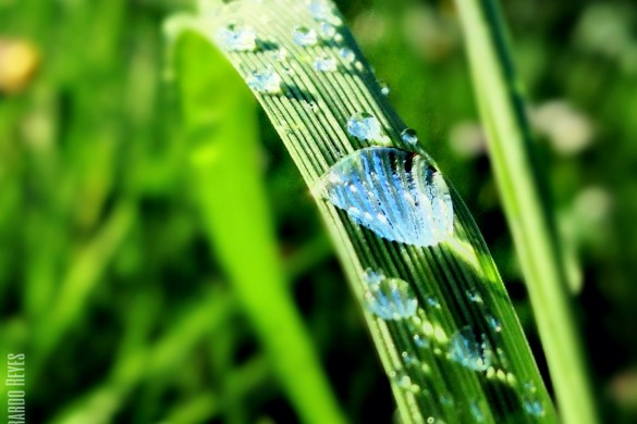 A Close Look at Grass: Photos Shared by Users