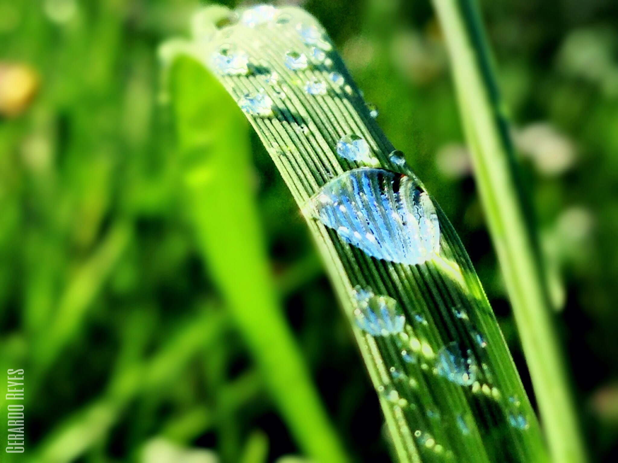 Close up photo of a dew on the grass