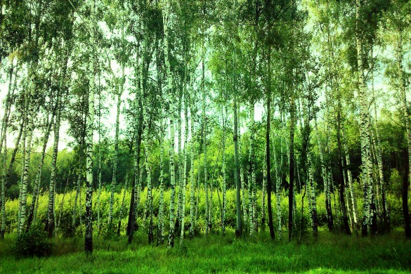 Capturing Trees: Amazing Photos Shared by Users