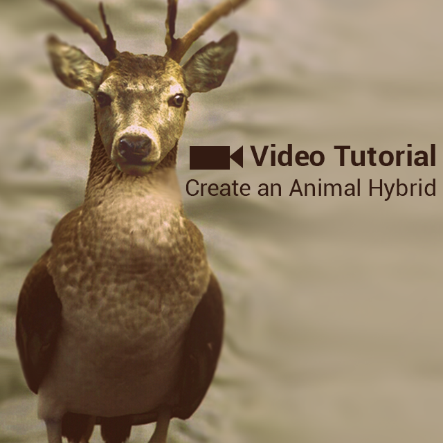 how to edit an animal hybrid