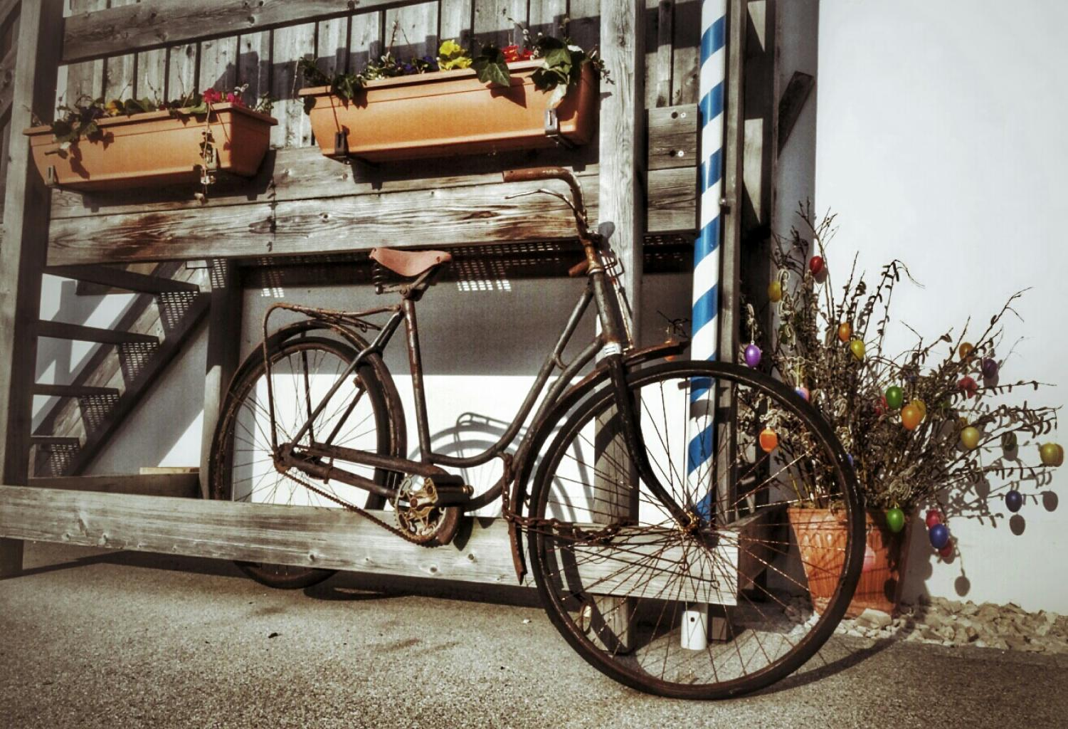 Bicycle and flower pots photo