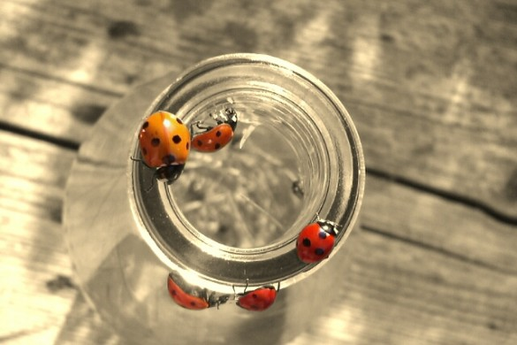Improve your Luck by Checking Out Our Photo Gallery of Ladybugs