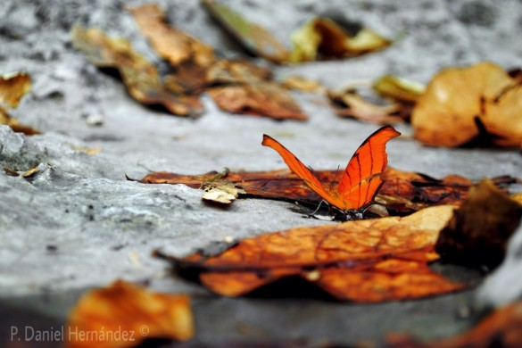 Butterfly Photos by PicsArtists will Send Your Heart A Flutter