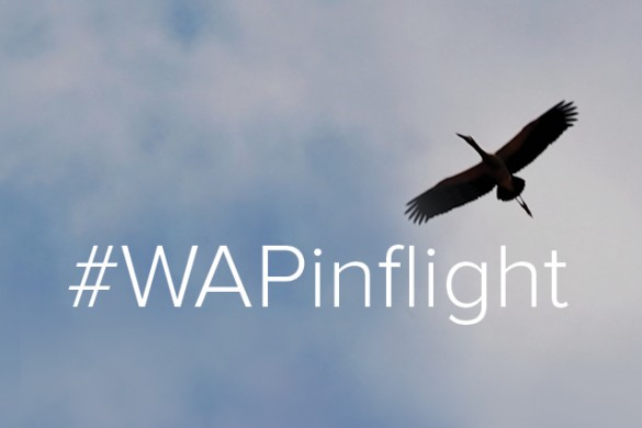 Capture Flight for Our Weekend Art Project #WAPinflight