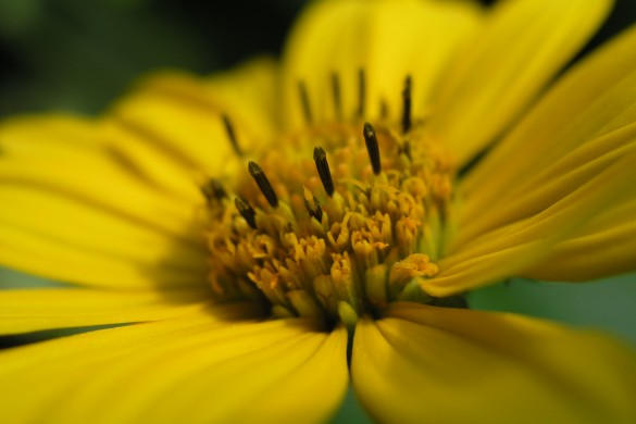 Macro Photography from PicsArtists