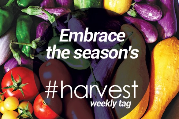 Embrace the Season's Bounty with the Weekly Tag #harvest