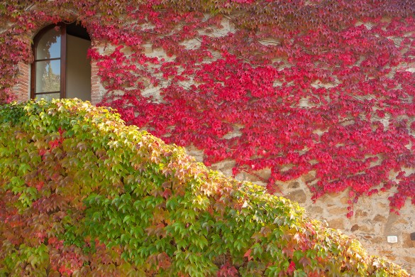 How to Photograph the Bold Colors of Autumn