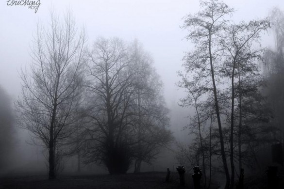 Experiencing the Autumn #fog: A Photo Gallery