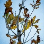 An Autumn Leaves Photo