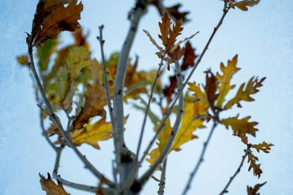 The Heart of Fall: An Autumn Leaves Photo Gallery