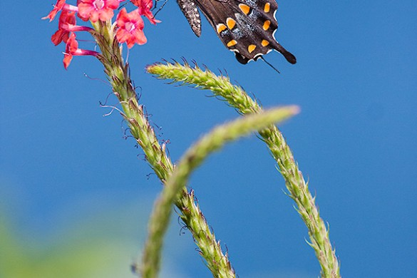 4 Tips to Capture the Brilliance of Butterflies