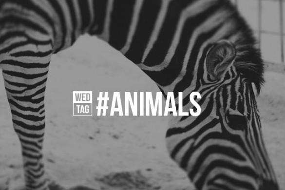 Celebrate the Animal Kingdom with the Wednesday Hashtag #animals