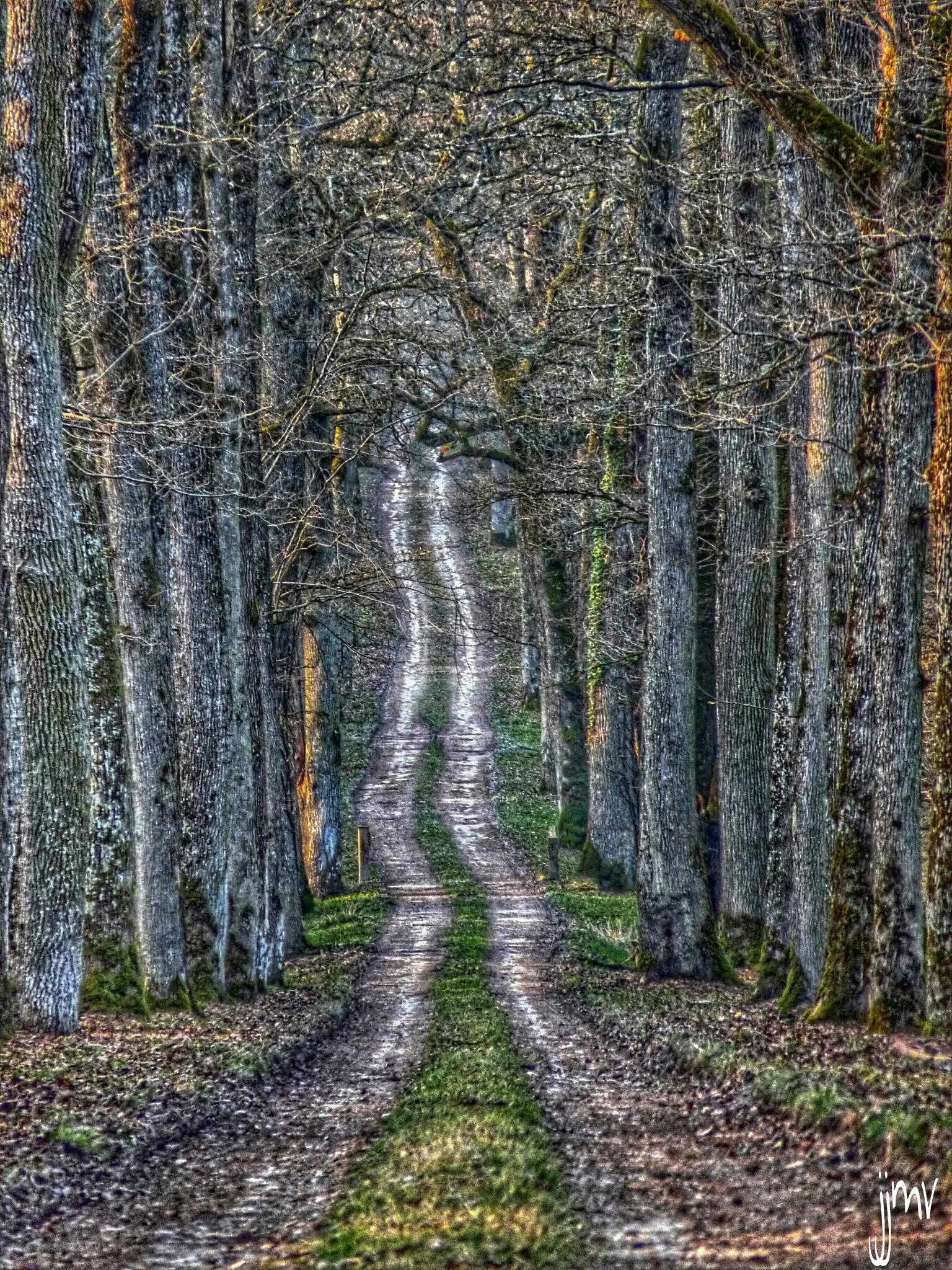 path in the wood