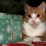 Cat around Christmas presents photo