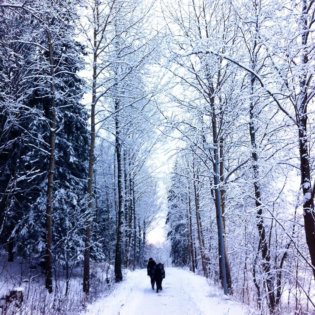 Snowy wood photo with 2 men walking