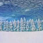 Winter wonderland photo of snowy trees