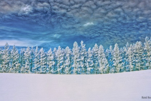 Winter Wonderland: A #snowscape Weekly Tag Photo Gallery
