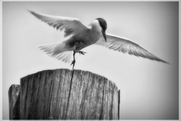 Feathery Photo, Users Share Spectacular Bird Shots