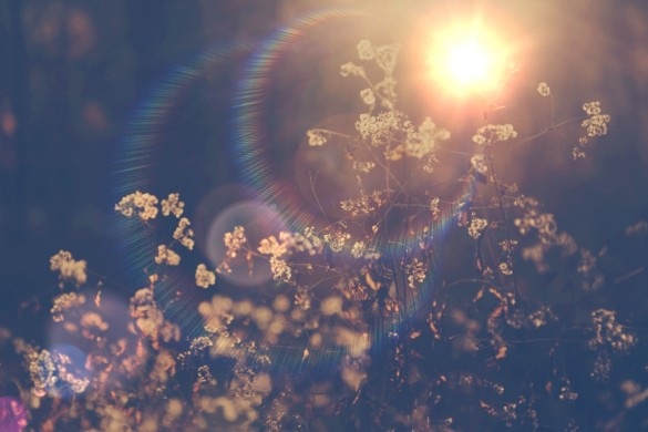 10 Winning Shots from our Lens Flare Weekend Art Project