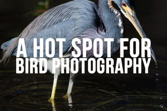 Florida's Gulf Coast: A Hot Spot for Bird Photography